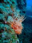 Si necesitáis más información al respecto os pasamos el enlace web del centro de buceo Diving Stones en Benidorm y del Colegio Lope de Vega