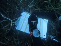 Buceo en un paraíso ecológico La posidonia oceánic