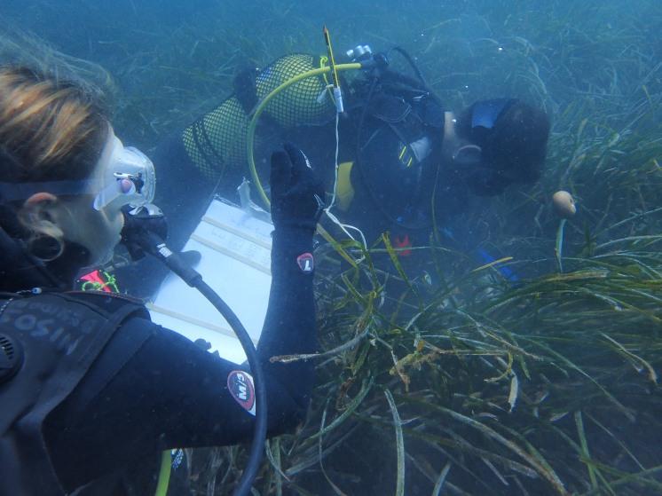 Buceo en un paraíso ecológico La posidonia oceánica
