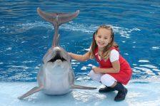 actividades con delfines