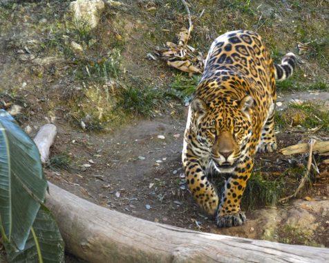 terra natura zoo