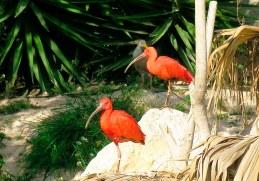 Ibis aviario Terra Natura