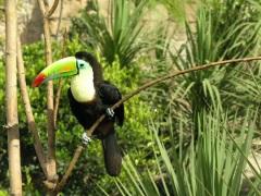 Aviario Chachalaca nido (52)