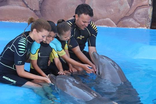 Fotografía de una familia de un padre, una madre, un niño y una niña, sentados en una piscina en Mundomar Benidorm. Llevan un neopreno y están acariciando a dos delfines que salen del agua.